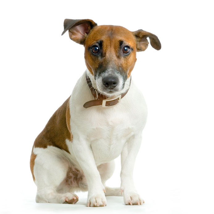 Veterinary Visits: Go To The Vet Or Treat At Home?