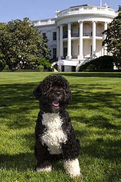 Presidents Day Trivia For Dog Lovers