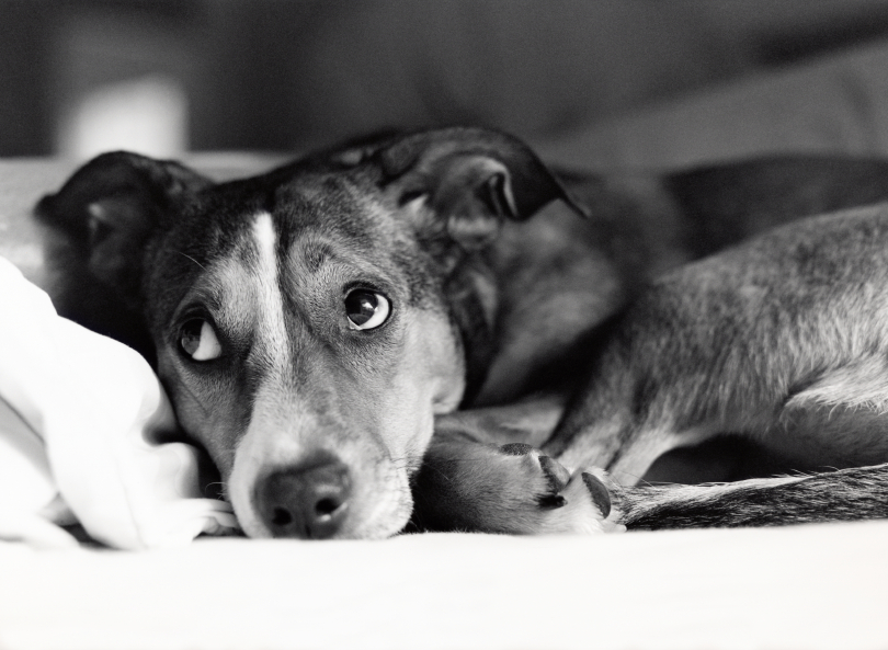Dog Behavior Problems? It Could Be Boredom