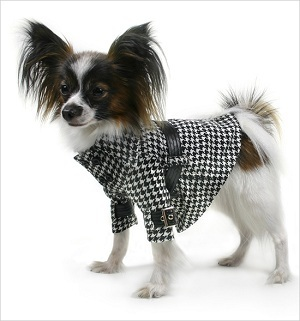 Online Pet Boutique: Shop For Your LOVE Today!