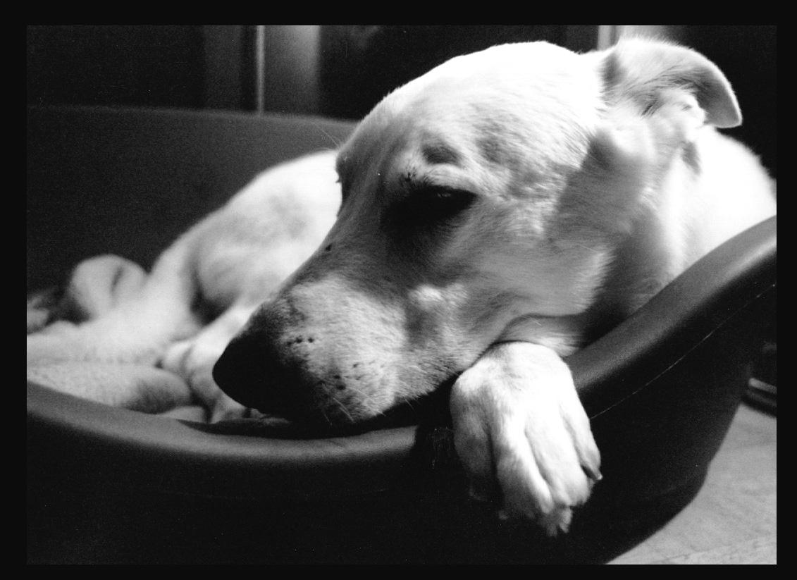 Barrio Dogs Happy Hour Fundraiser Feb. 16