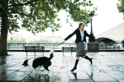 5 Easy Steps To Improve Your Dog Walks
