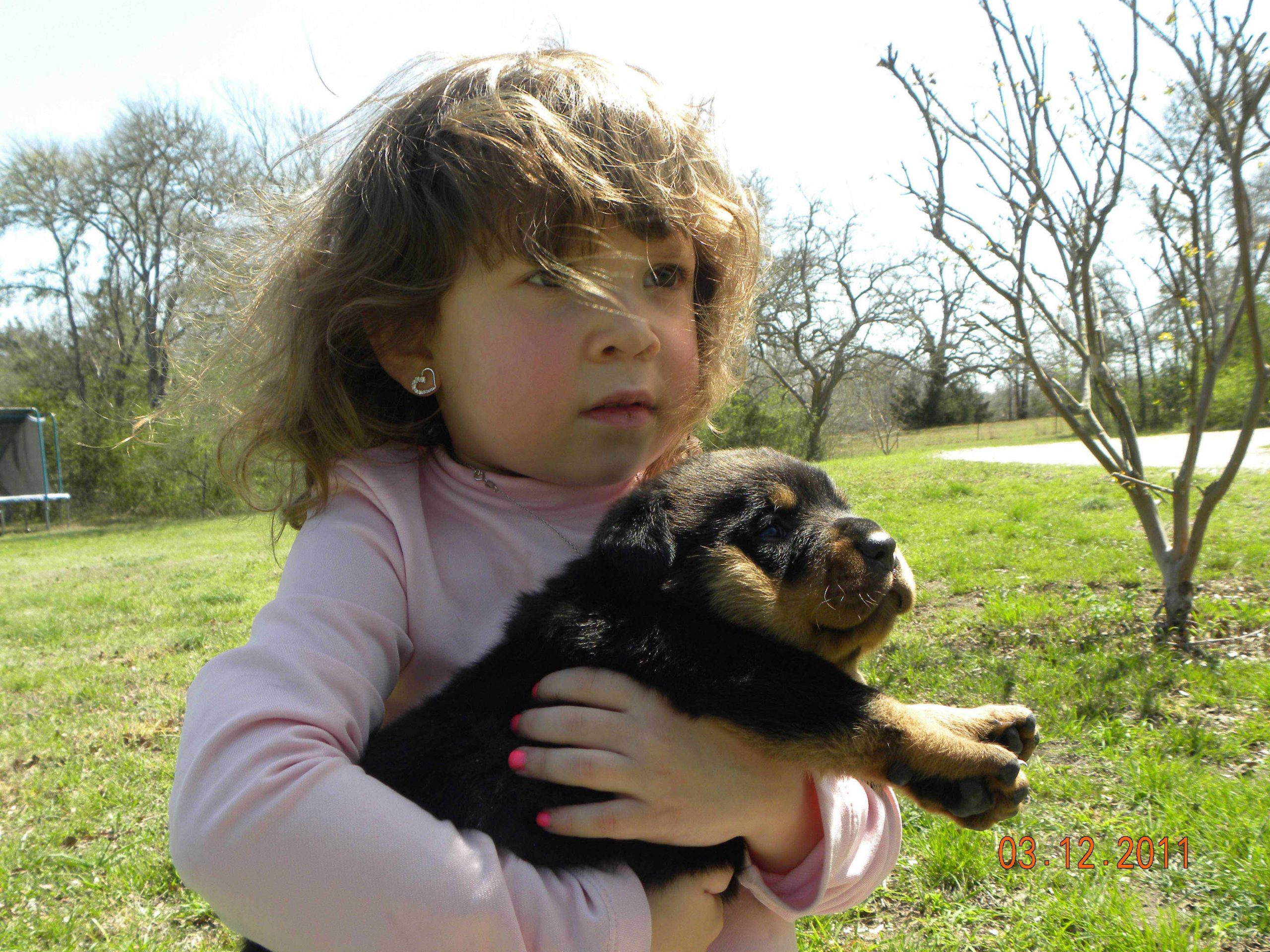 Puppy Mill Rescue By Houston SPCA Yields 230 Rottweilers + Exotics