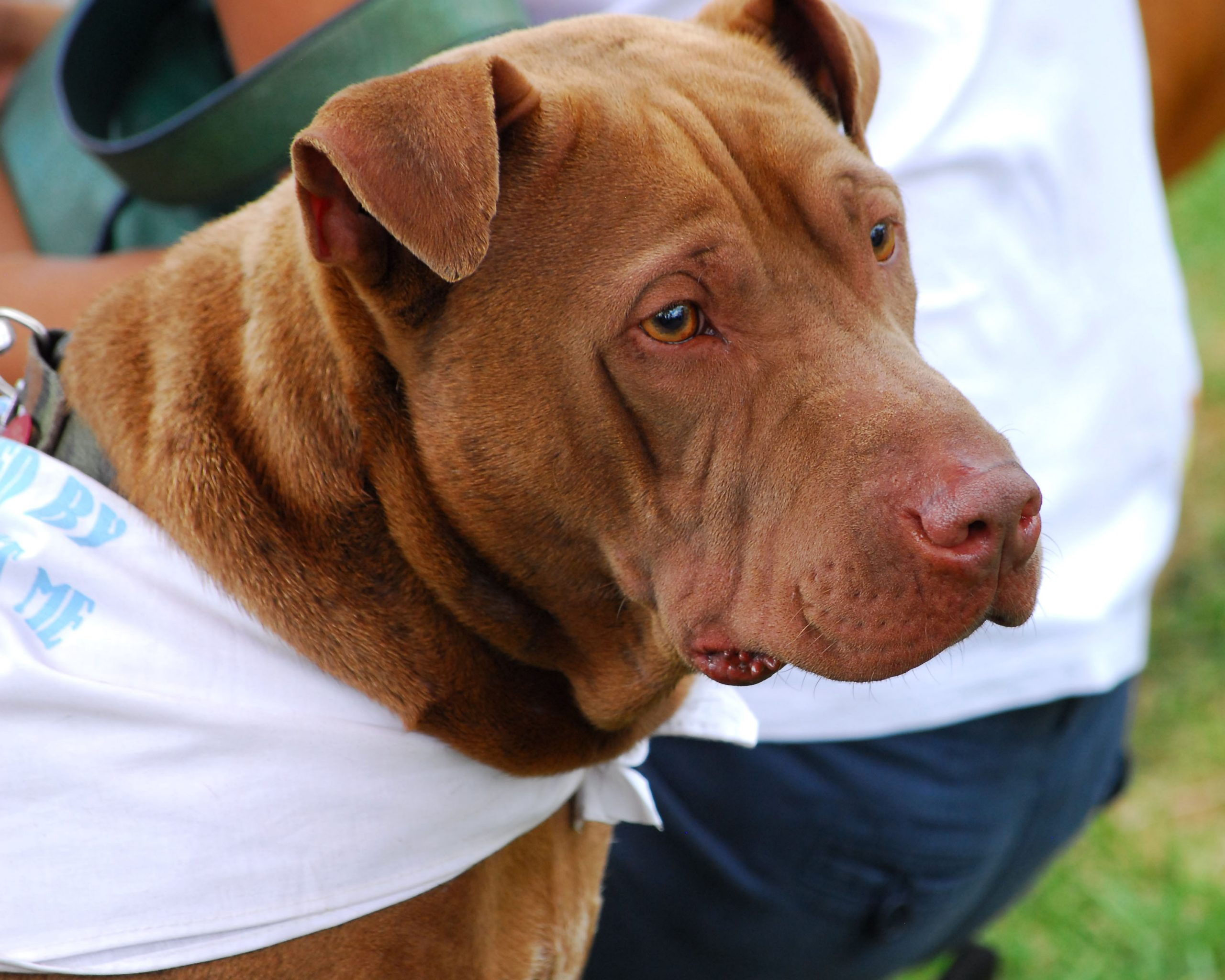 Meet Dallas.  He's Looking for a New Forever Home