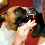 Dog Bites Hand That Feeds Him