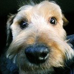 Is your Dog Not Listening? Easy Tips to Create a Better Listener