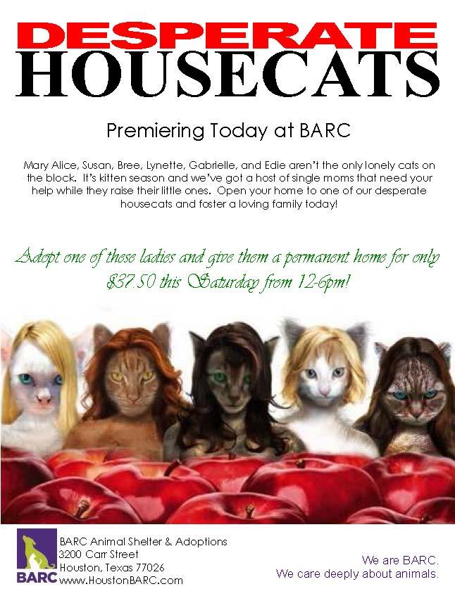 Desperate Housecats at BARC: 300 Cats Want You!