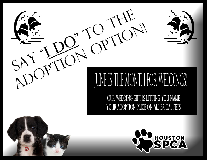 June Is Bridal Month At The Houston SPCA!