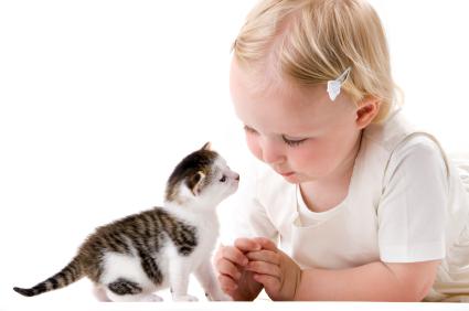 Citizens for Animal Protection Sponsors Feline Frenzy