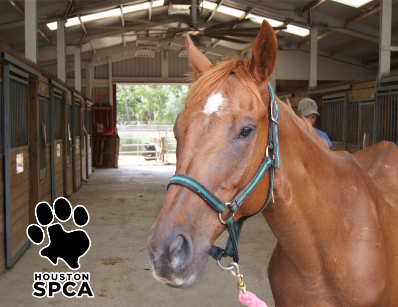 "Houston SPCA ""BARN DAY"" June 11"