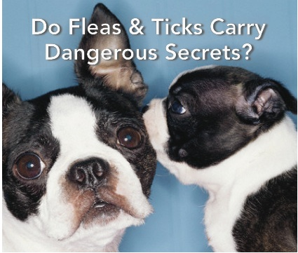 Do Fleas & Ticks Carry Dangerous Secrets?