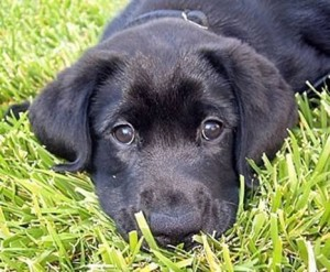 Puppy Basics and Raising Kids