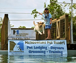 Dock Dogs Fun Jump At Meadowlake Pet Resort
