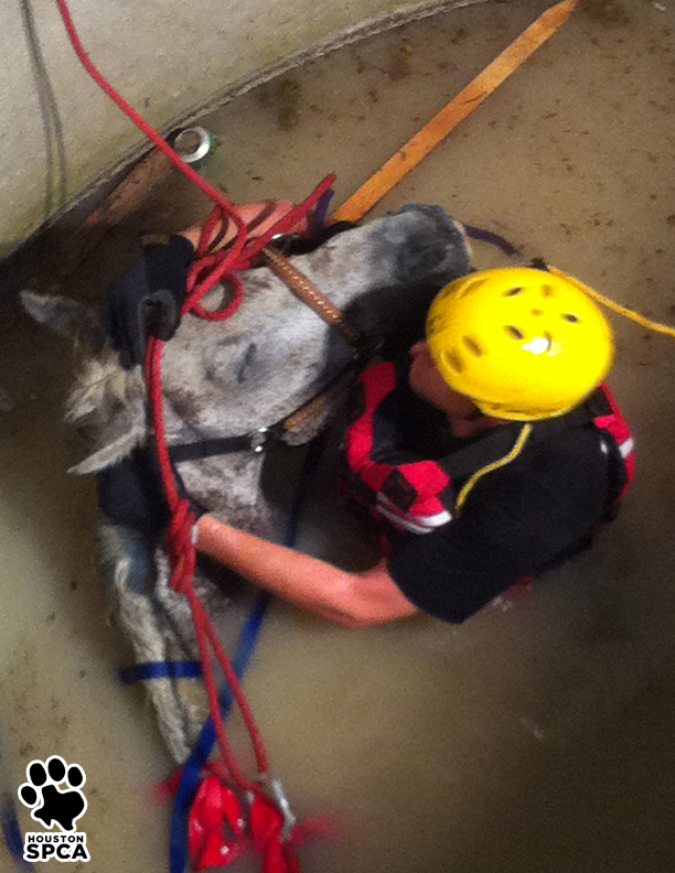 Houston SPCA Makes Dramatic Save of Horse