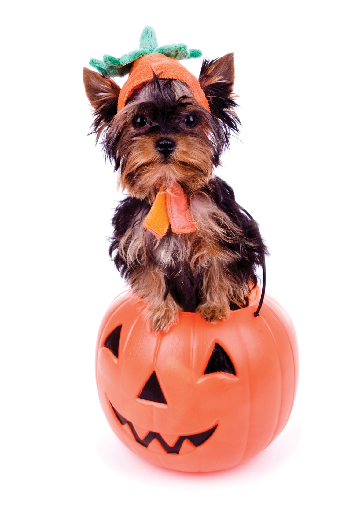 October Pet Events In Houston Still To Come!