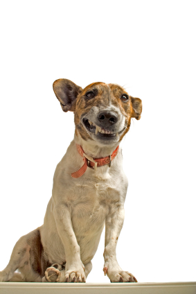 Fixing Dog Problems – It Begins with the Relationship