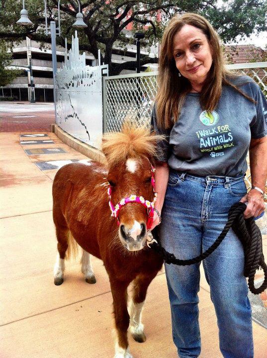 iWalk For Animals Raises Over $300K