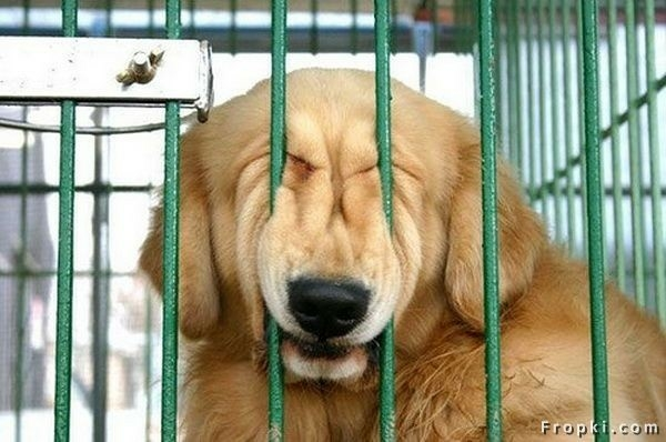 Crate Training:  Love it OR Hate it