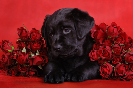 How to Train a Puppy – Let's Talk