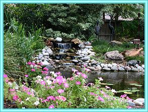 Houston Pond Tour Wants Your Backyard Pond Photos