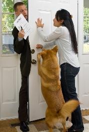 Good Dog Behavior: Train Great Doggie Door Manners