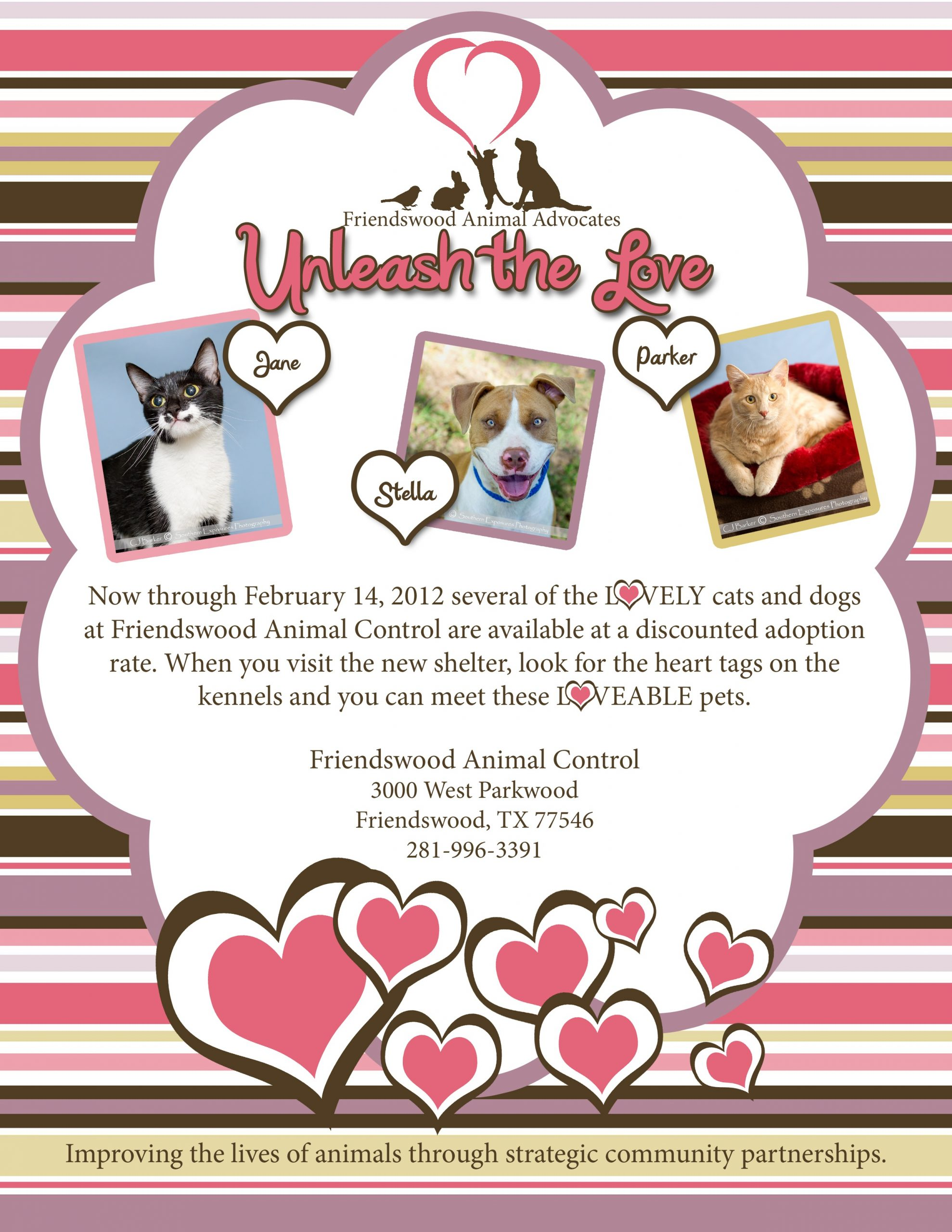 Friendswood Animal Advocates Offer Discounted Adoptions