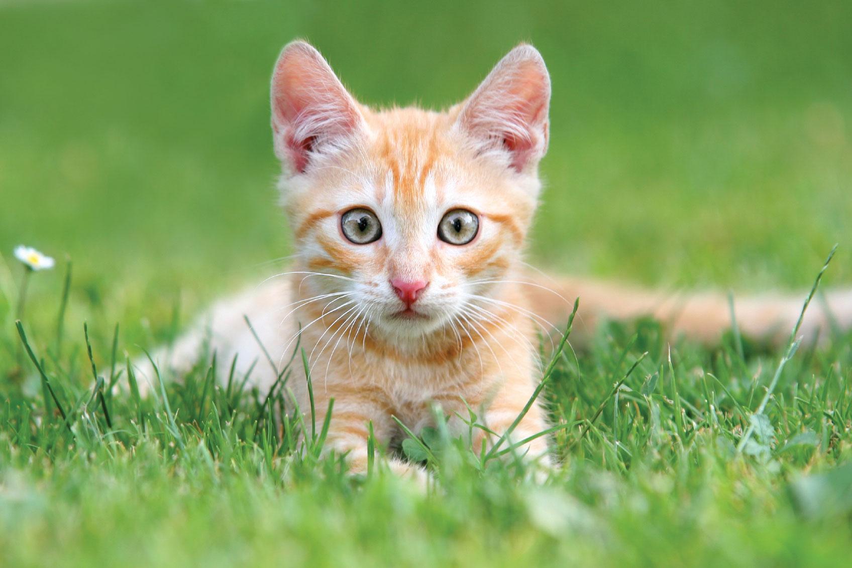 Spay/Houston & Adopt A Cat Fundraiser Feb. 11