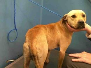 Houston Police & BARC Save Dog