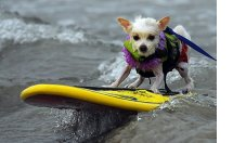 Surf's Up For Spring Break at Camp Bow Wow Kemah
