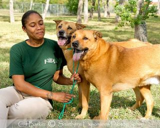 Houston Dogs Need A Home After 5 Yrs In Kennel
