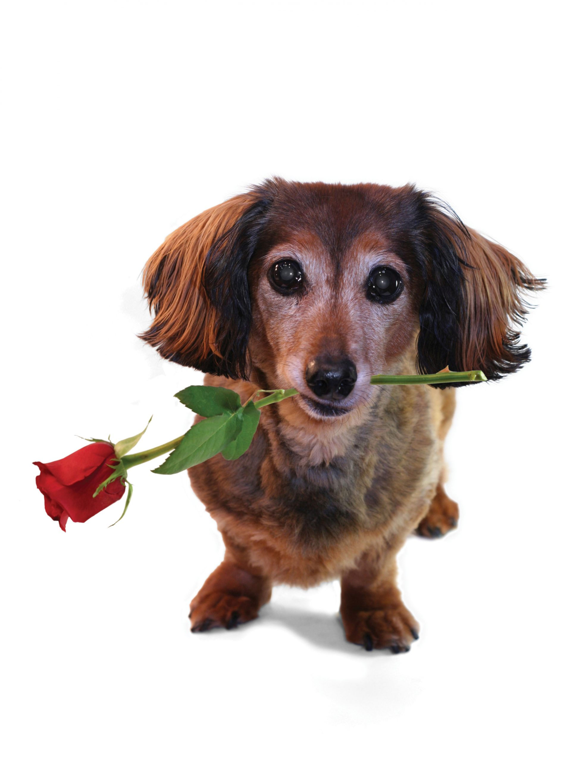 Happy Valentines Day From Houston PetTalk!