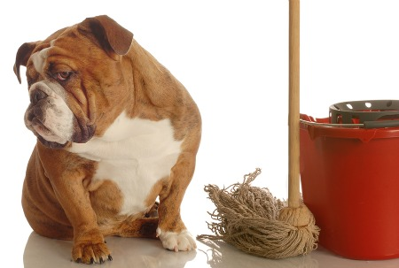 Your Dog's Behavior Will Change When You Change