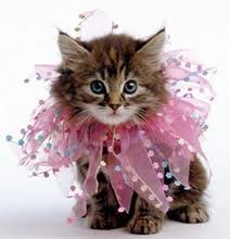 "City of Sugar Land Pet Services ""My Furry Valentine"" Adoption"