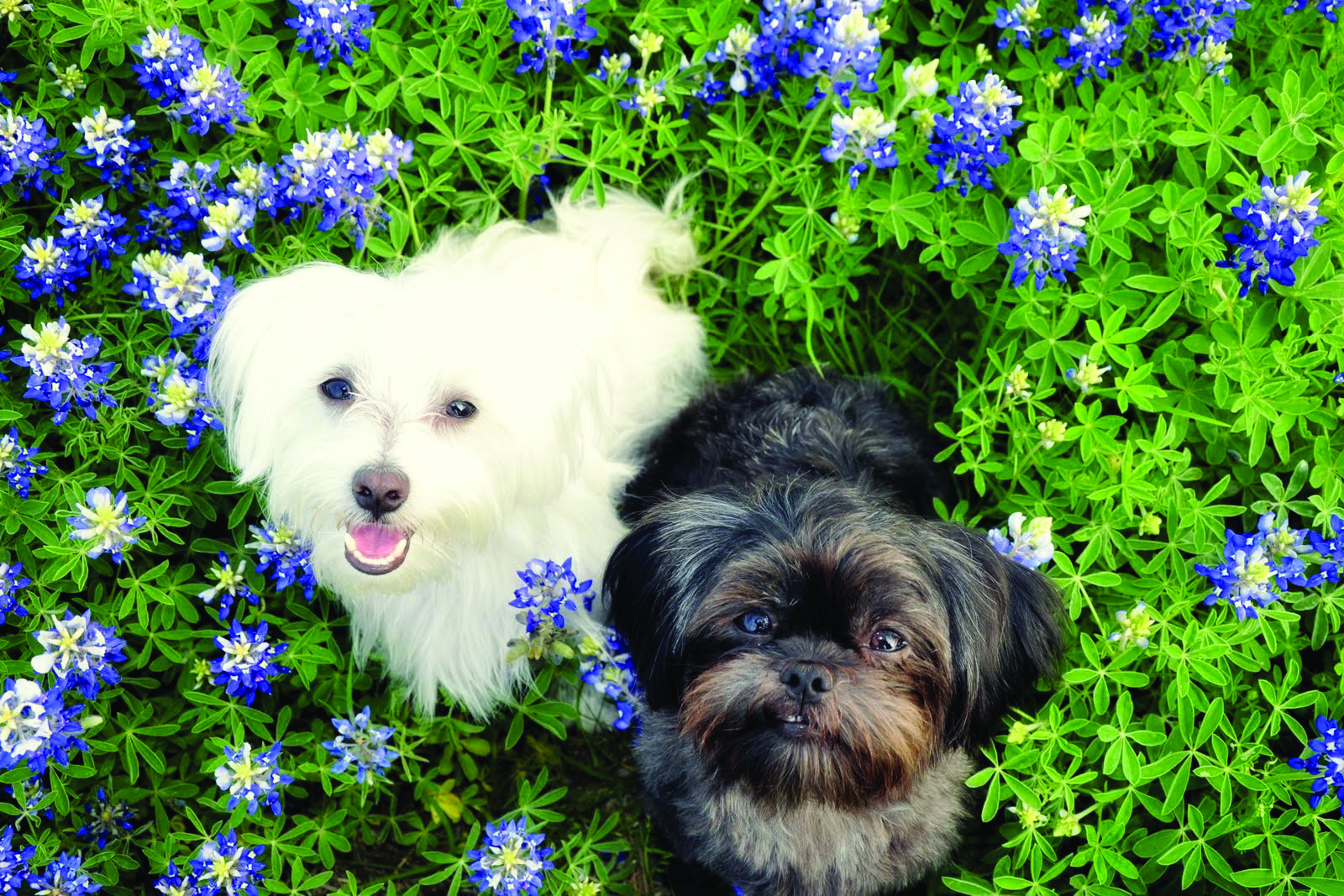 Enter your Pet's Photo in PetTalk's Annual Wildflower Photo Contest!