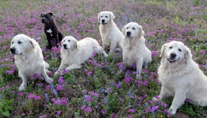 Vote In Houston PetTalk's 6th Annual Wildflower Pet Photo Contest