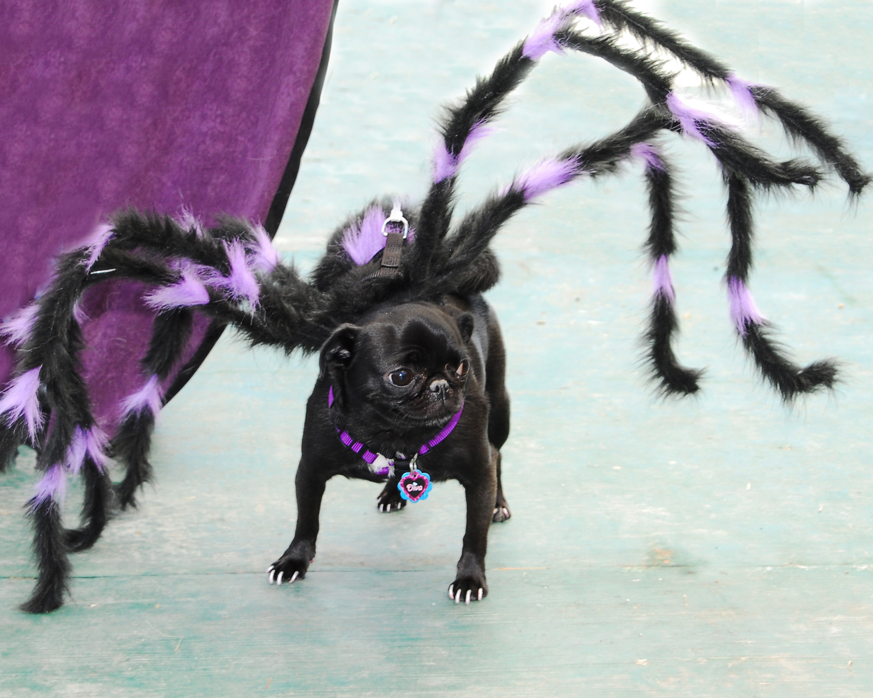 Enter Houston PetTalk's Costume Contest This Saturday April 21!