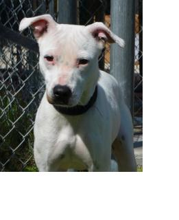"""Last Chance For """"Shelby"""" – Needs A Home!"""