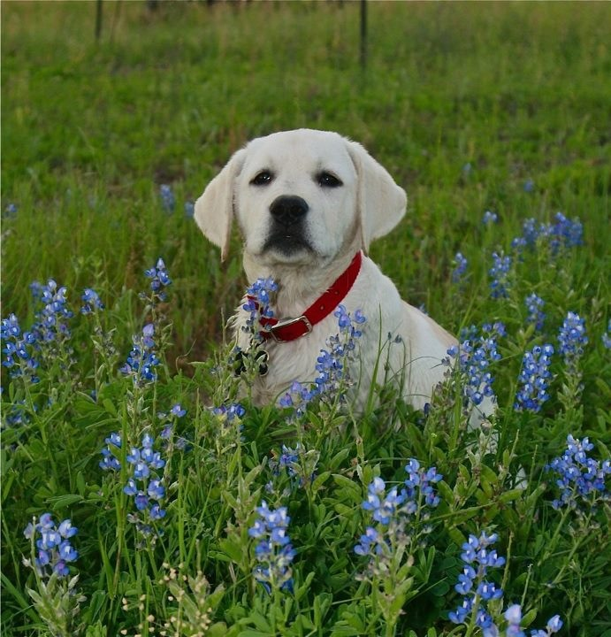 """Vote For Your Favorite Photo: PetTalk's """"Pets In The Wildflowers Contest!"""""""