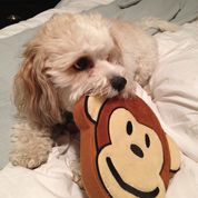 Pridebites Dog Toys: For The Ruffest Of Dogs!