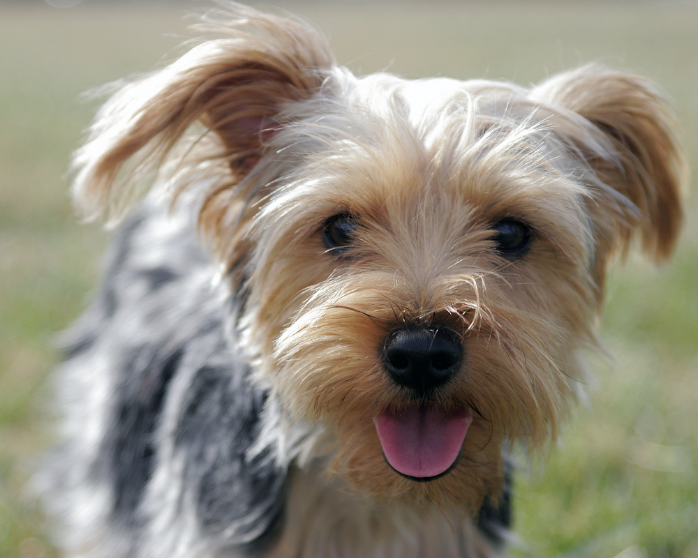 Traveling With Fido this Summer?  Follow These Holistic Tips!