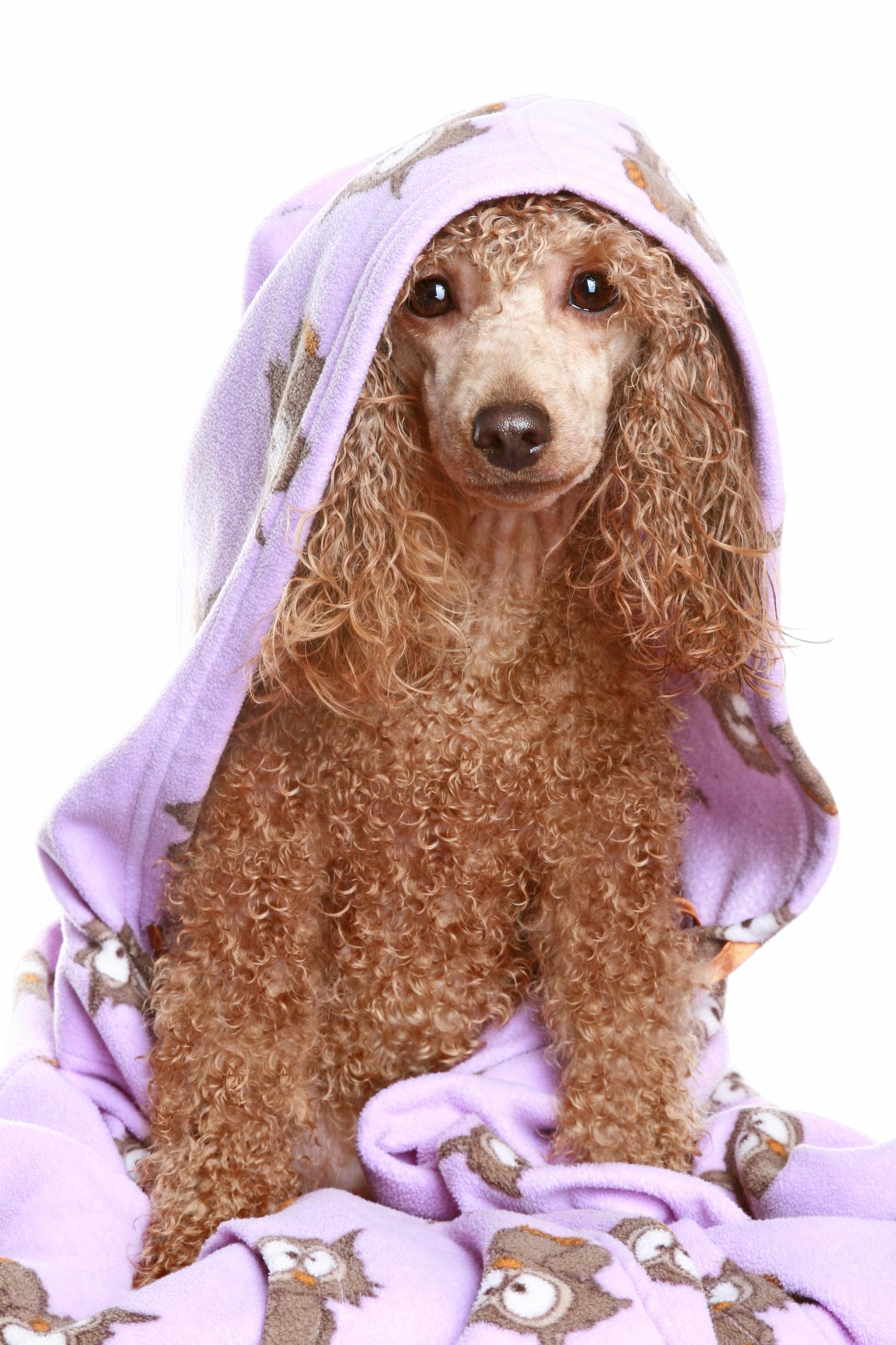 JOB: Groomer Wanted at Wishbone Pet Care