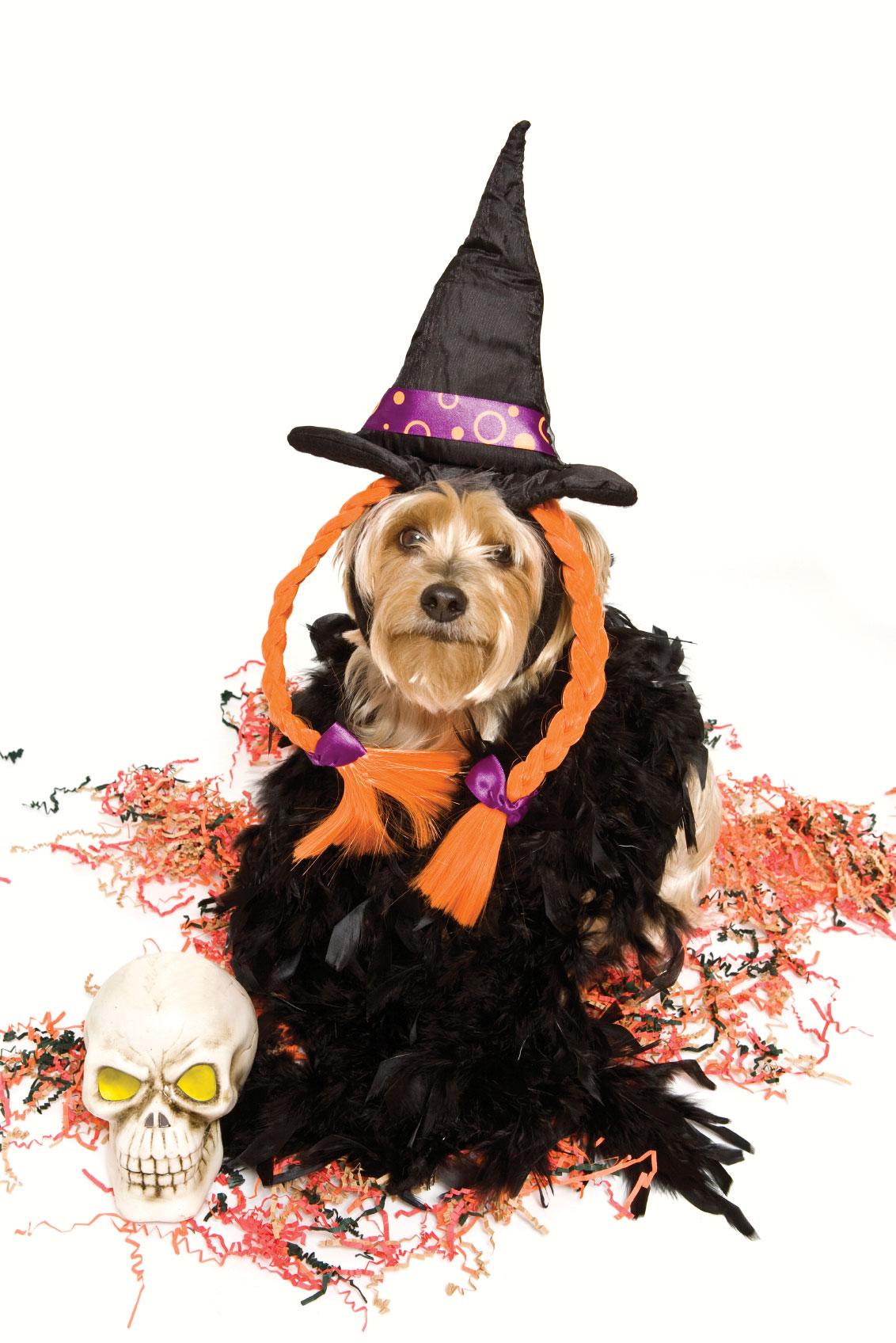 Pet Poison Helpline: Halloween Dangers