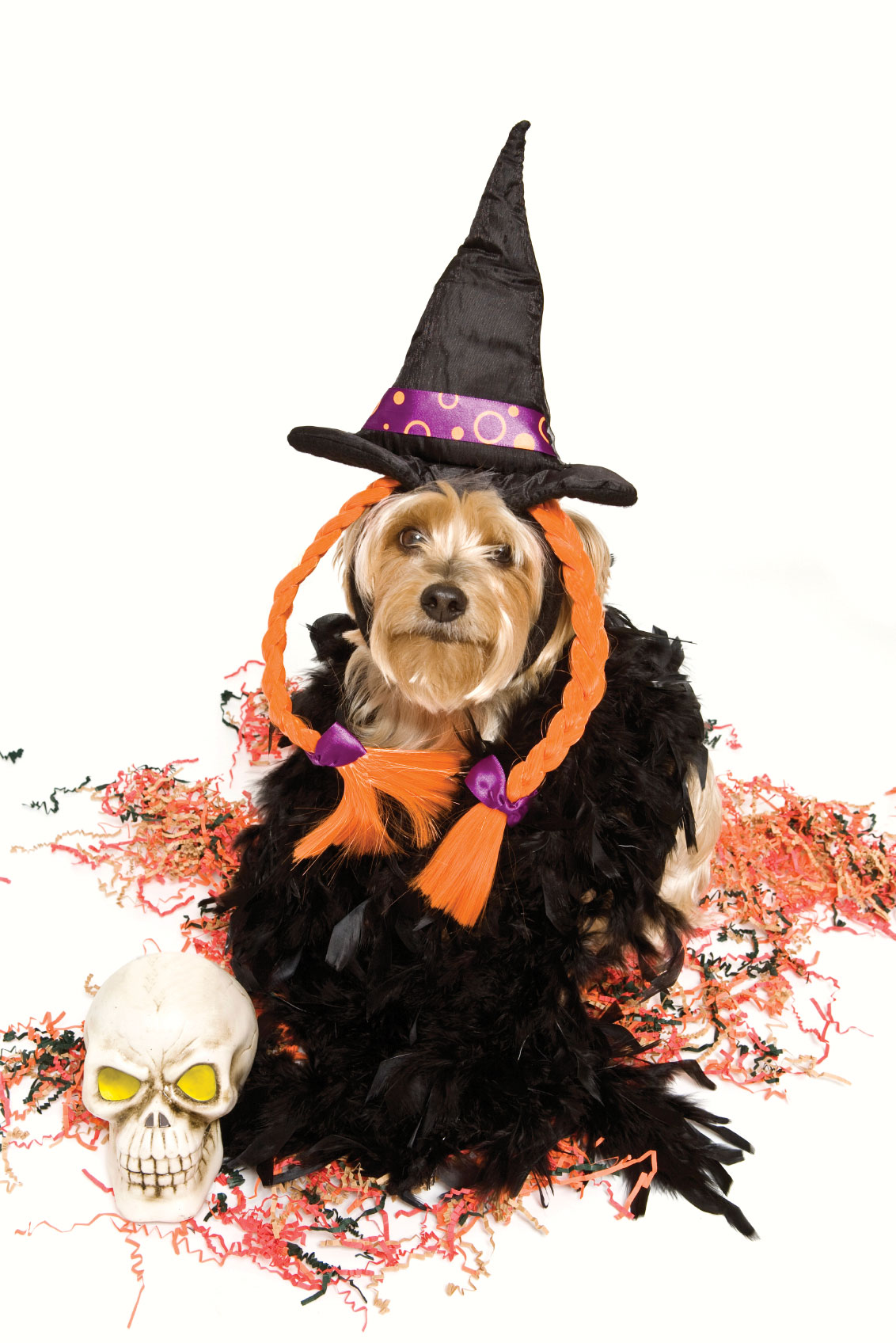 Dog House Pet Salon Halloween Event