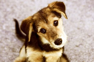 Train Your Puppy Before He Grows Up