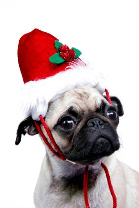 Dog Training Tips: A Safe Christmas