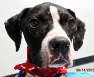 """Corridor Rescue Needs Help With """"Buster"""""""