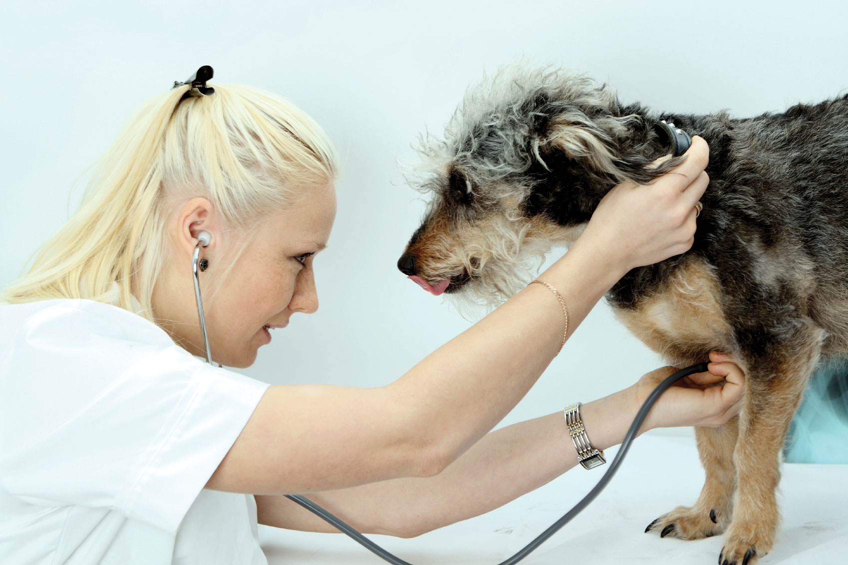 Canine Cancer: Breed Dispositions