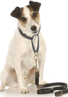 Dog Training: Common Sense Tips