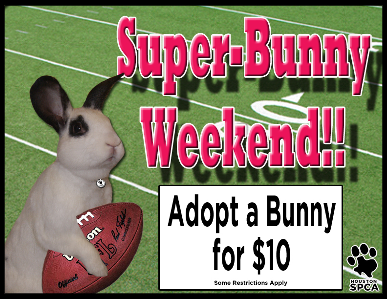 Houston SPCA Bunny Special This Weekend