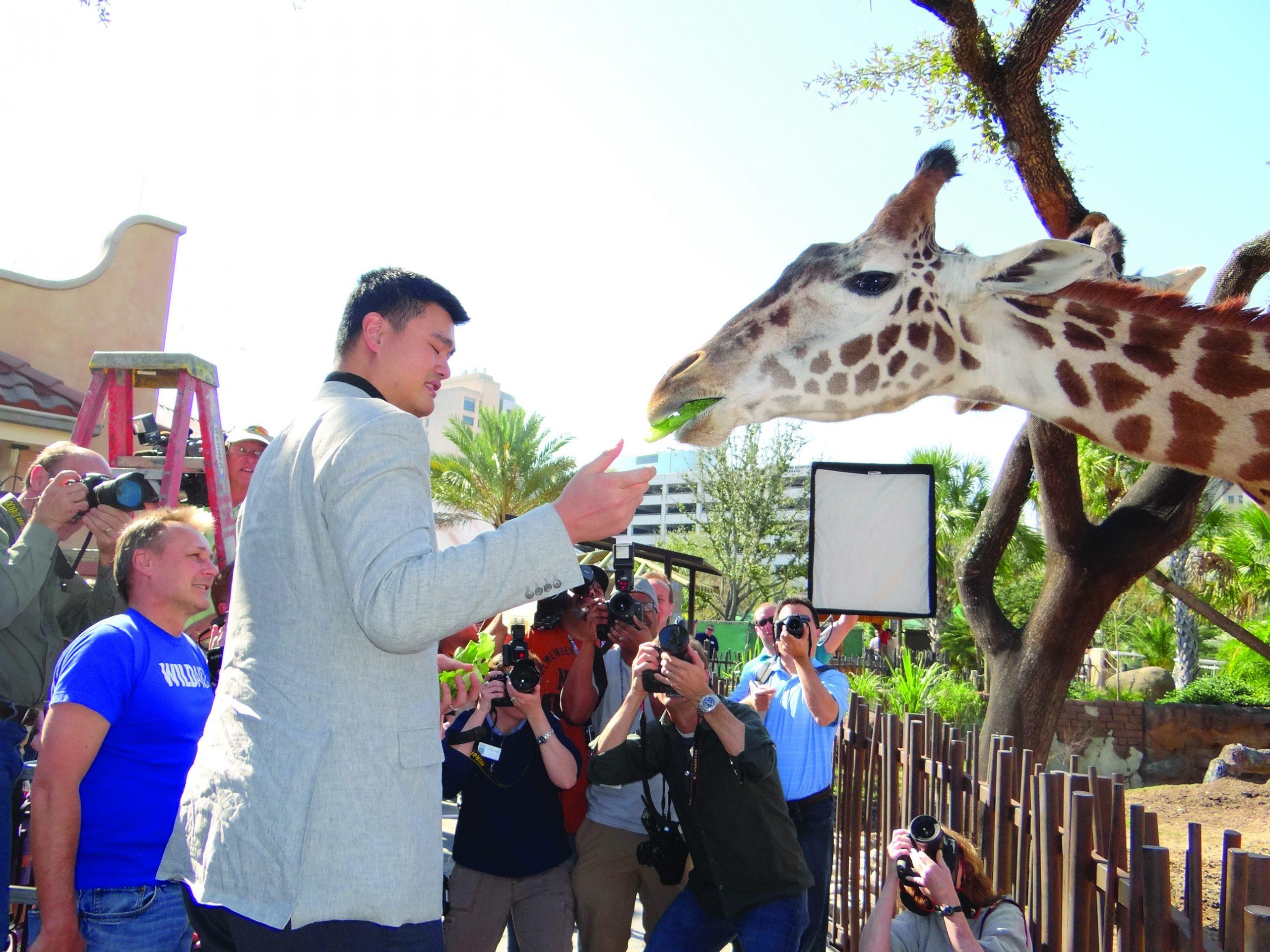 """New Baby Giraffe Born at Houston Zoo Named """"Yao"""""""